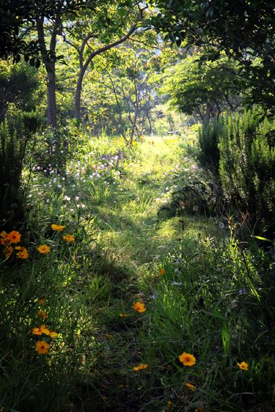 Flower_gardenb