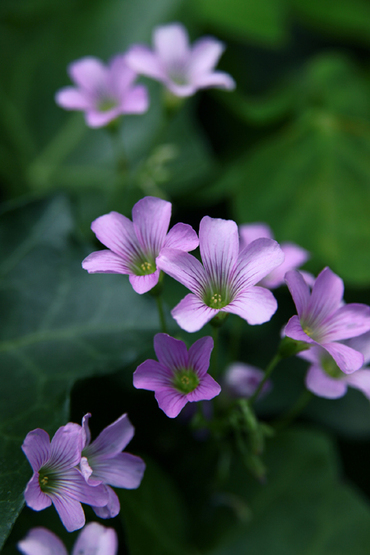 B1flowers_2